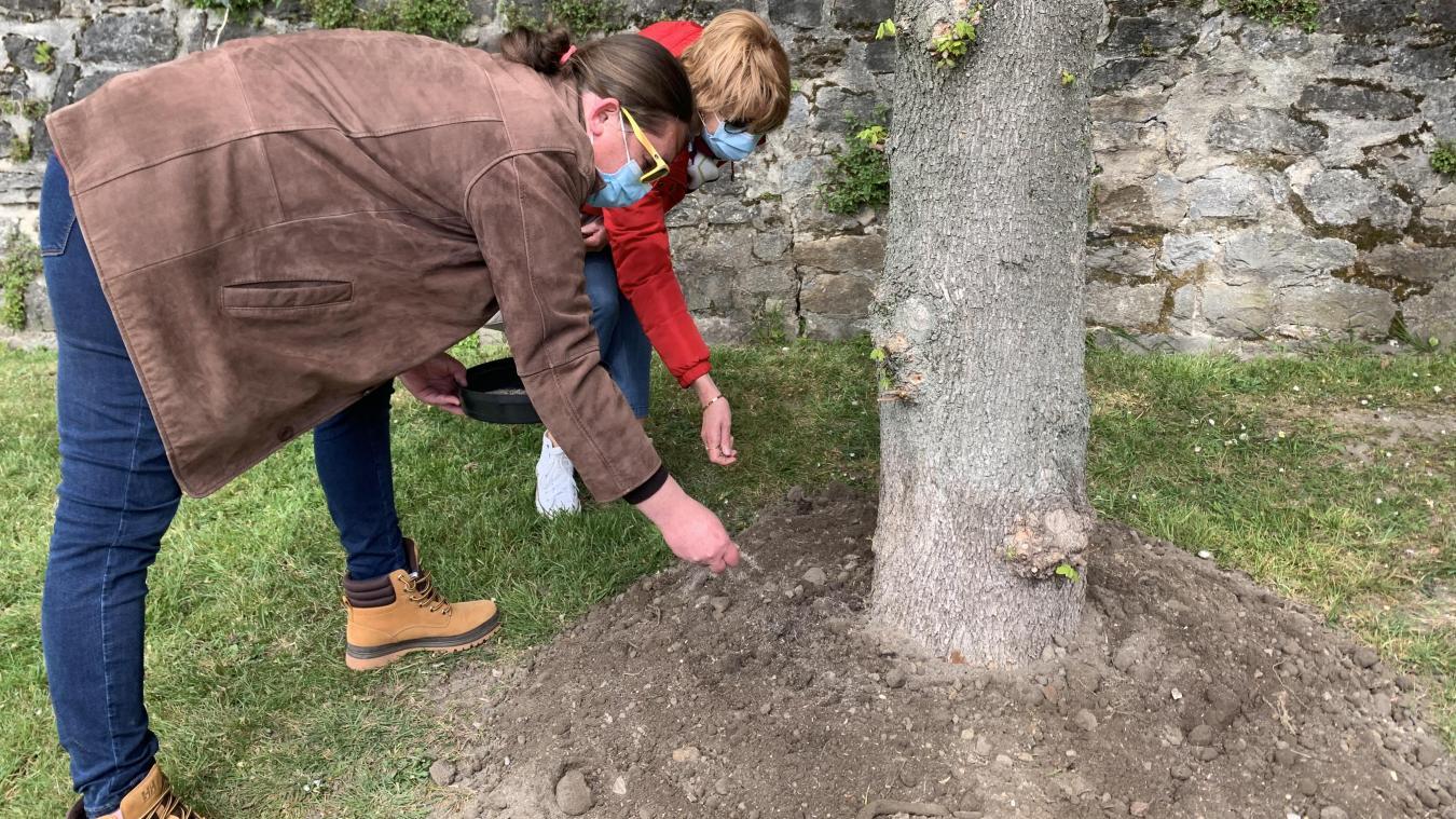 Avec l'opération «Adopte un arbre», Régine et Caroline sont les heureuses propriétaires d'un chêne érable situé à quelques pas des remparts.