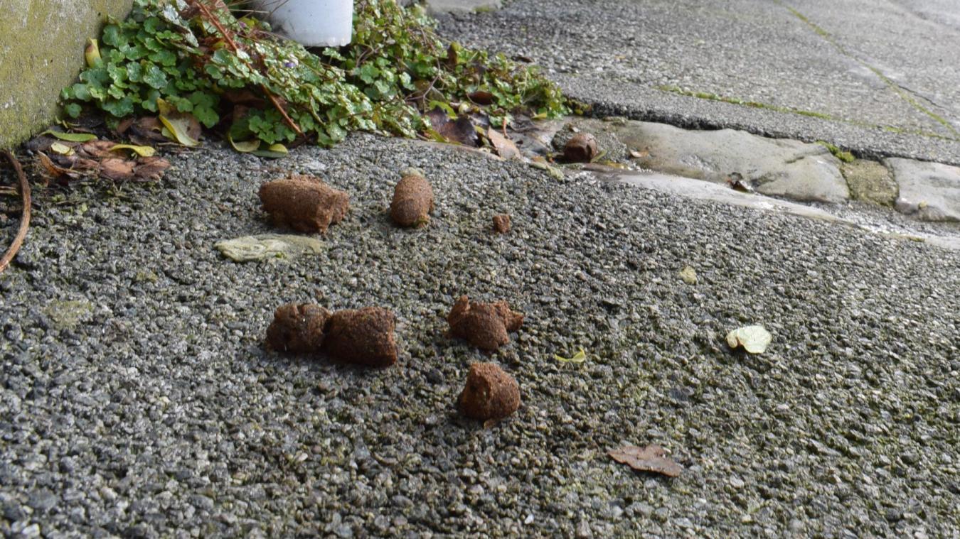 La municipalité de Wemaers-Cappel alerte sur les déjections canines
