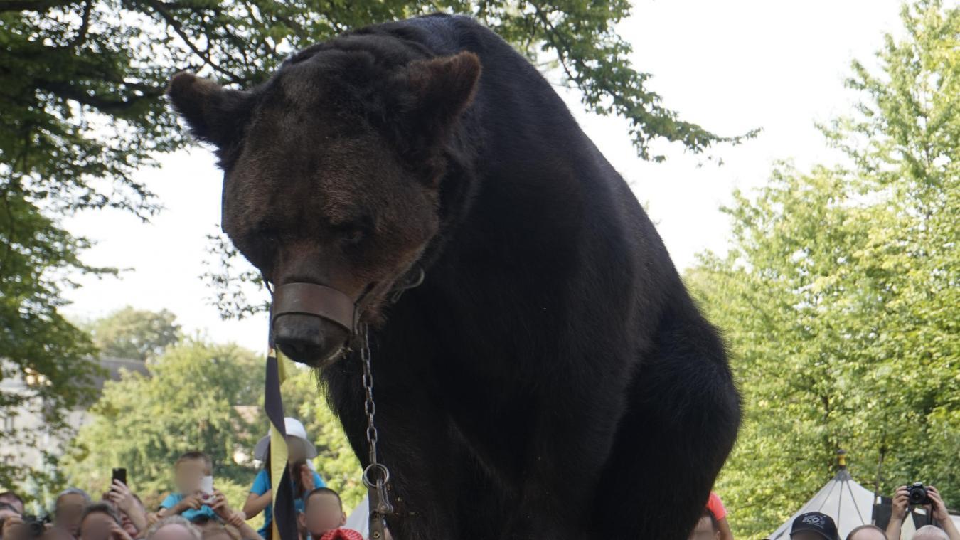 L'ours Micha maltraité à Racquinghem : le procès des propriétaires s'ouvre aujourd'hui