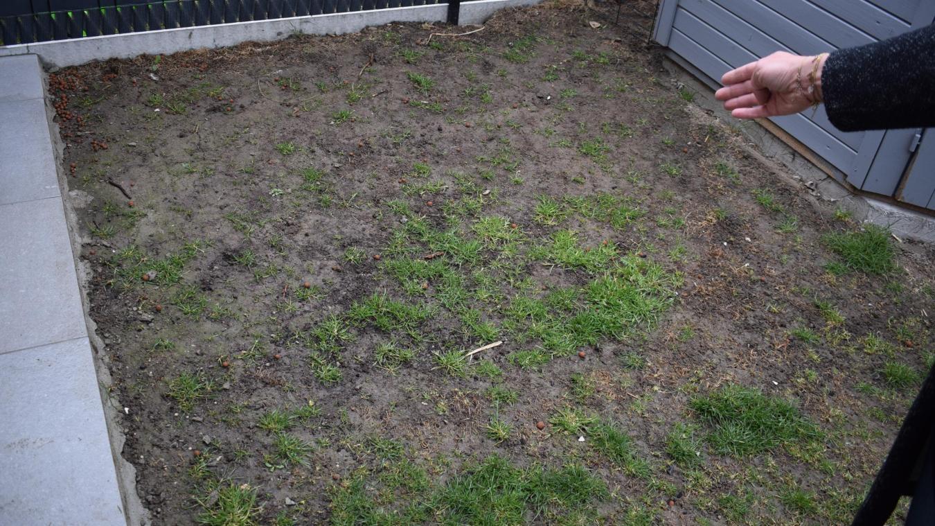 Voici à quoi ressemble désormais le jardin de la famille de Virginie, attaqué par les larves de tipules depuis l'automne.