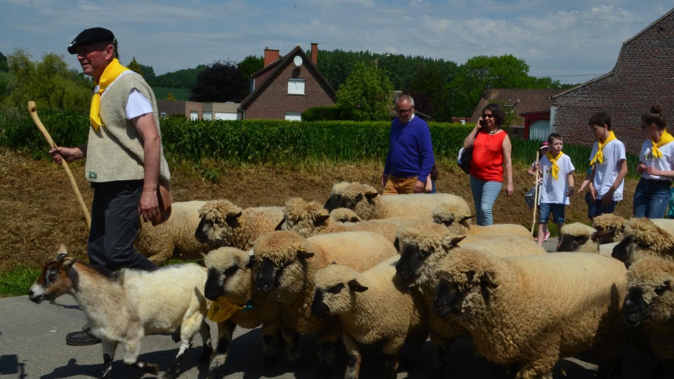 On ne pourra pas suivre Dominique Delabroye et ses 30 moutons lundi 24 mai. Le contexte sanitaire ne permet d'organiser le rendez-vous tant attendu le lundi de Pentecôte. (archives)