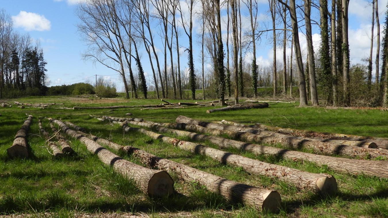 Téteghem-Coudekerque-Village : plusieurs arbres ont été coupés, mais d'autres seront replantés.