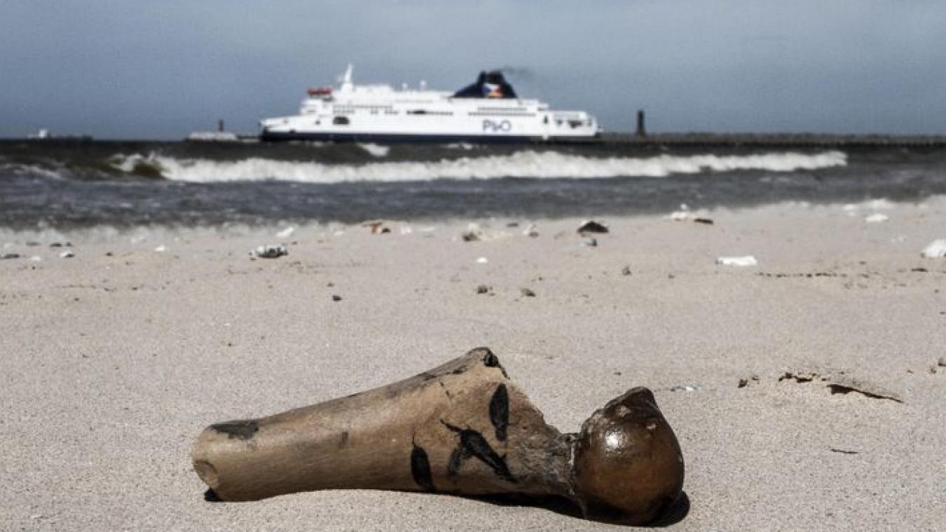 L'os a été photographié par Alain sur la plage de Calais.