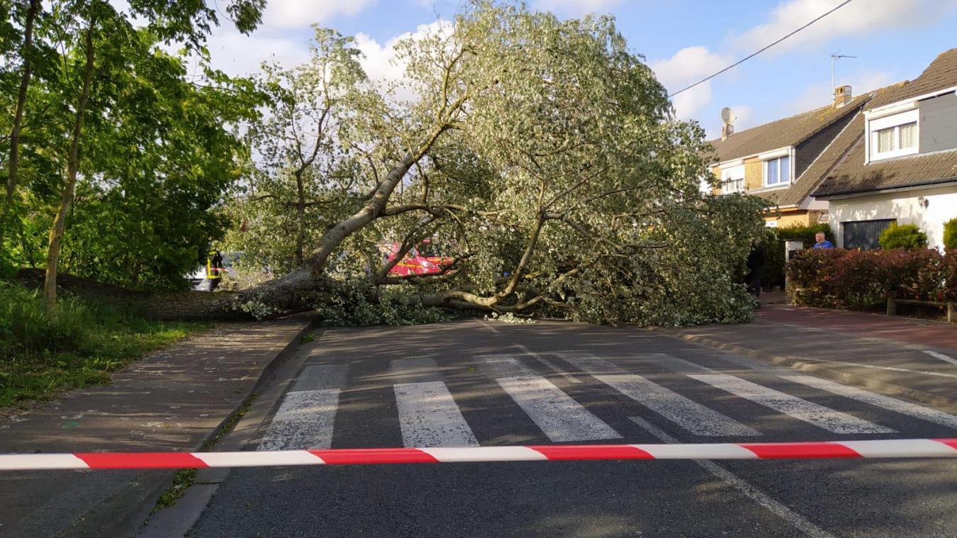 La chute de cet arbre n'a pas occasionné de dégâts sur les maisons avoisinantes.