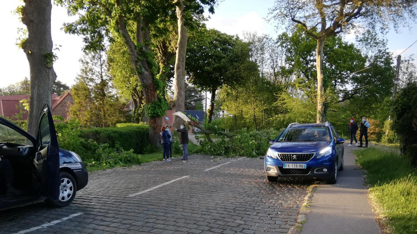 La chute de la grosse branche n'a fait ni victime ni dégât.