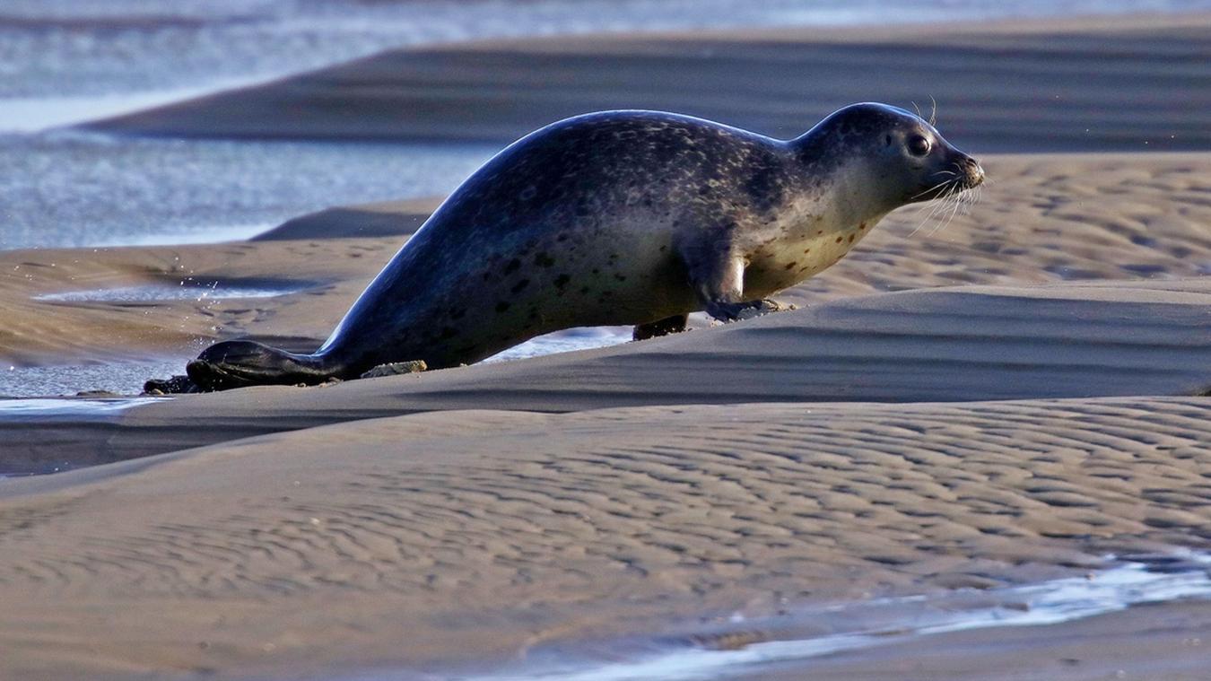 La préservation des phoques est l'un des axes de travail majeurs du parc. Ils sont environ 1 200 présents dans le parc.