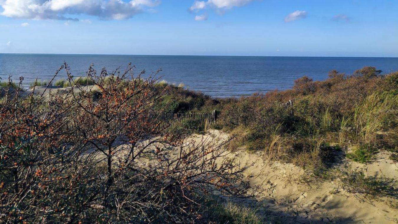 Dunkerque : un concours photo mis en place par la Communauté urbaine pour valoriser les paysages des Dunes de Flandre.