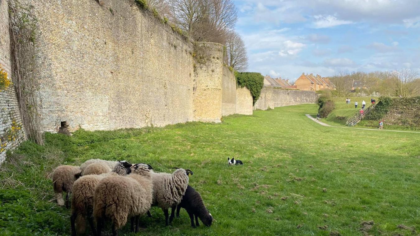 Lors de la balade, vous risquez d'apercevoir des moutons...