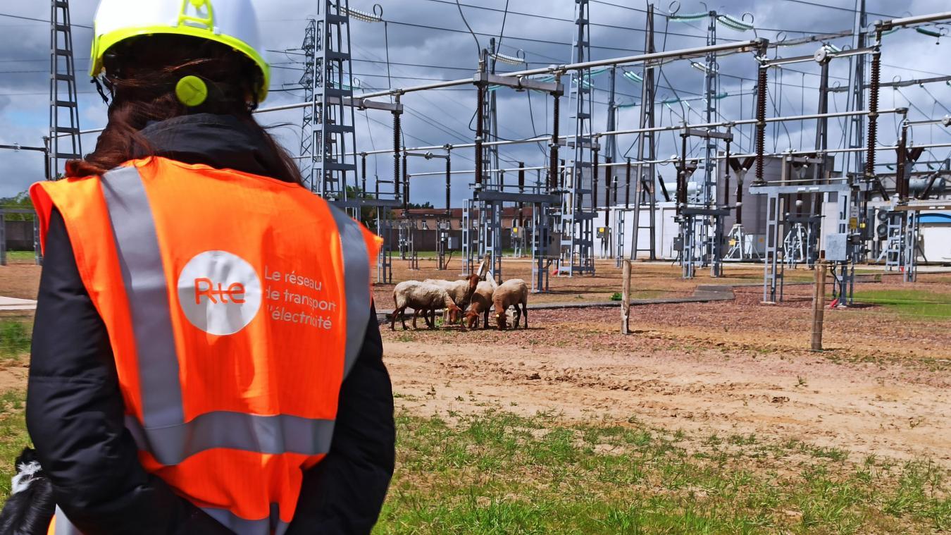Neufs moutons ont fait une apparition remarquée sur ce site à forte tension électrique.
