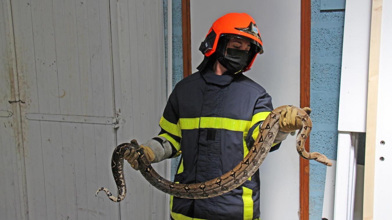 La prise en charge de nouveaux animaux de compagnie (NAC) fait partie de la formation.
