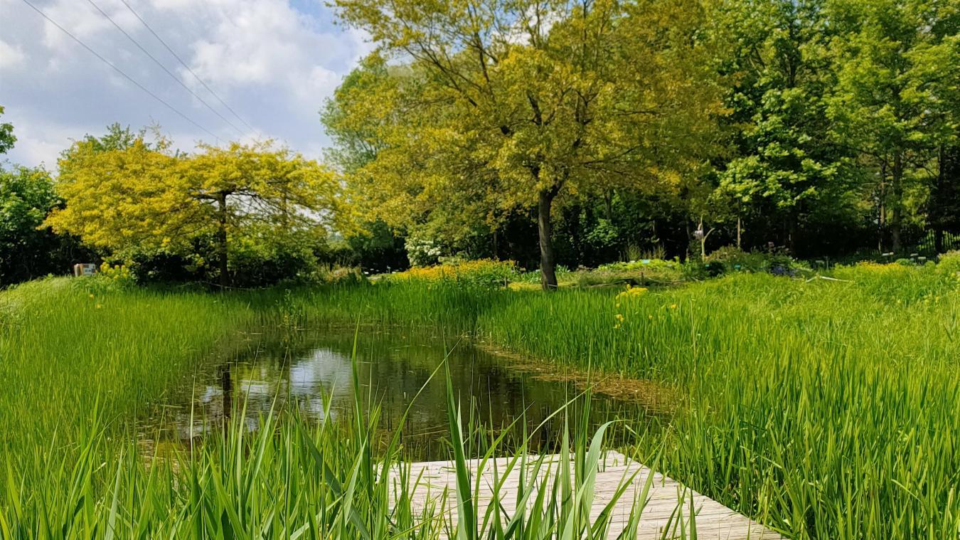 Rencontres sur le thème des plantes sauvages au conservatoire botanique de Bailleul