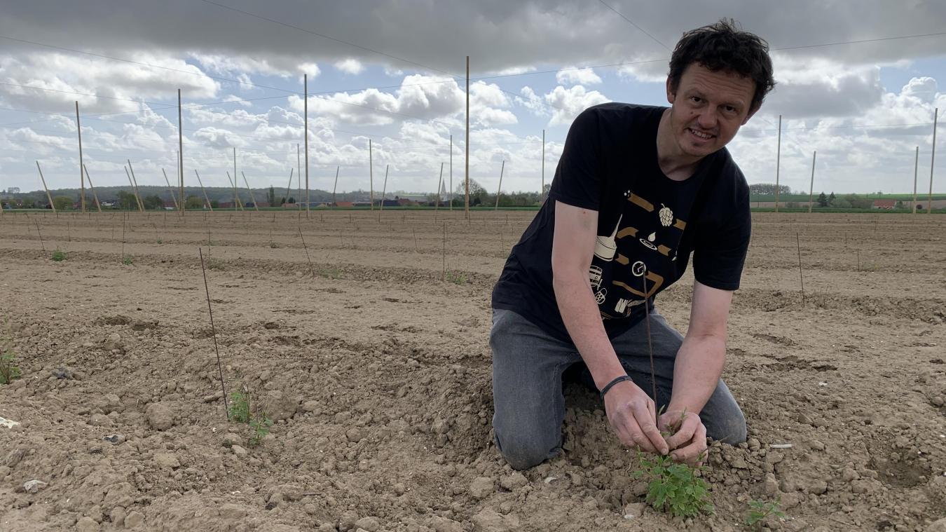 Les premières variétés de houblon sortent de terre. Une première récolte est prévue au mois de septembre prochain.