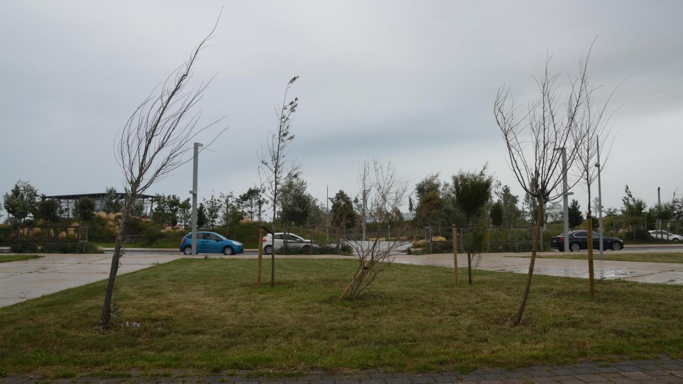 En août dernier, 60 arbres ont été abattus à la plage.