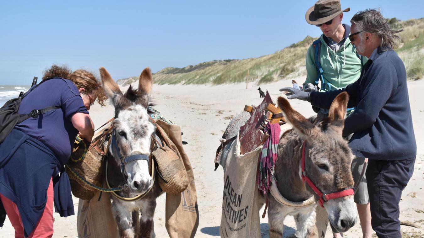 Le samedi 29 mai, Anne et Jacky se sont rendus sur la plage de Leffrinckoucke pour un essai avec leurs deux ânesses: Kacha (à gauche) et Nivea (à droite).