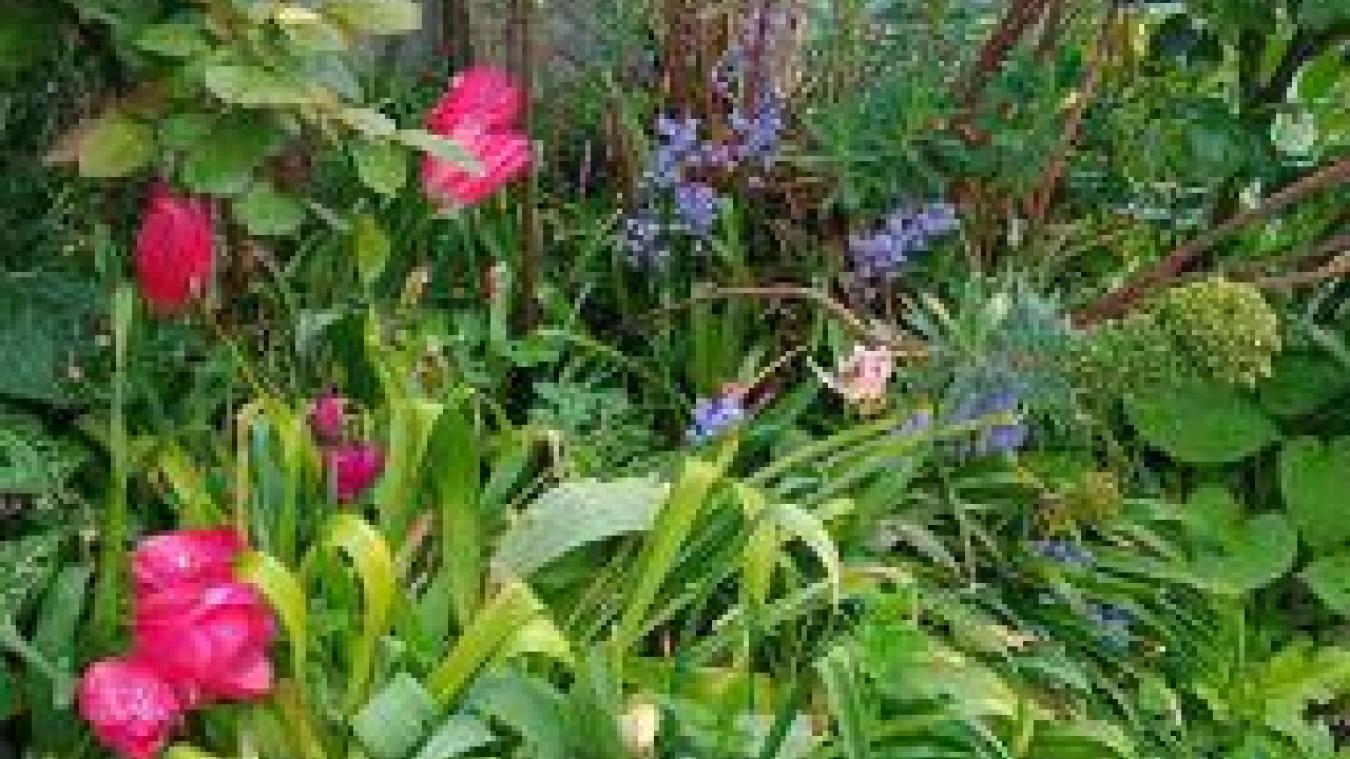 Rendez-vous dans « Mon jardin au naturel » en Flandre et dans le Dunkerquois ce week-end
