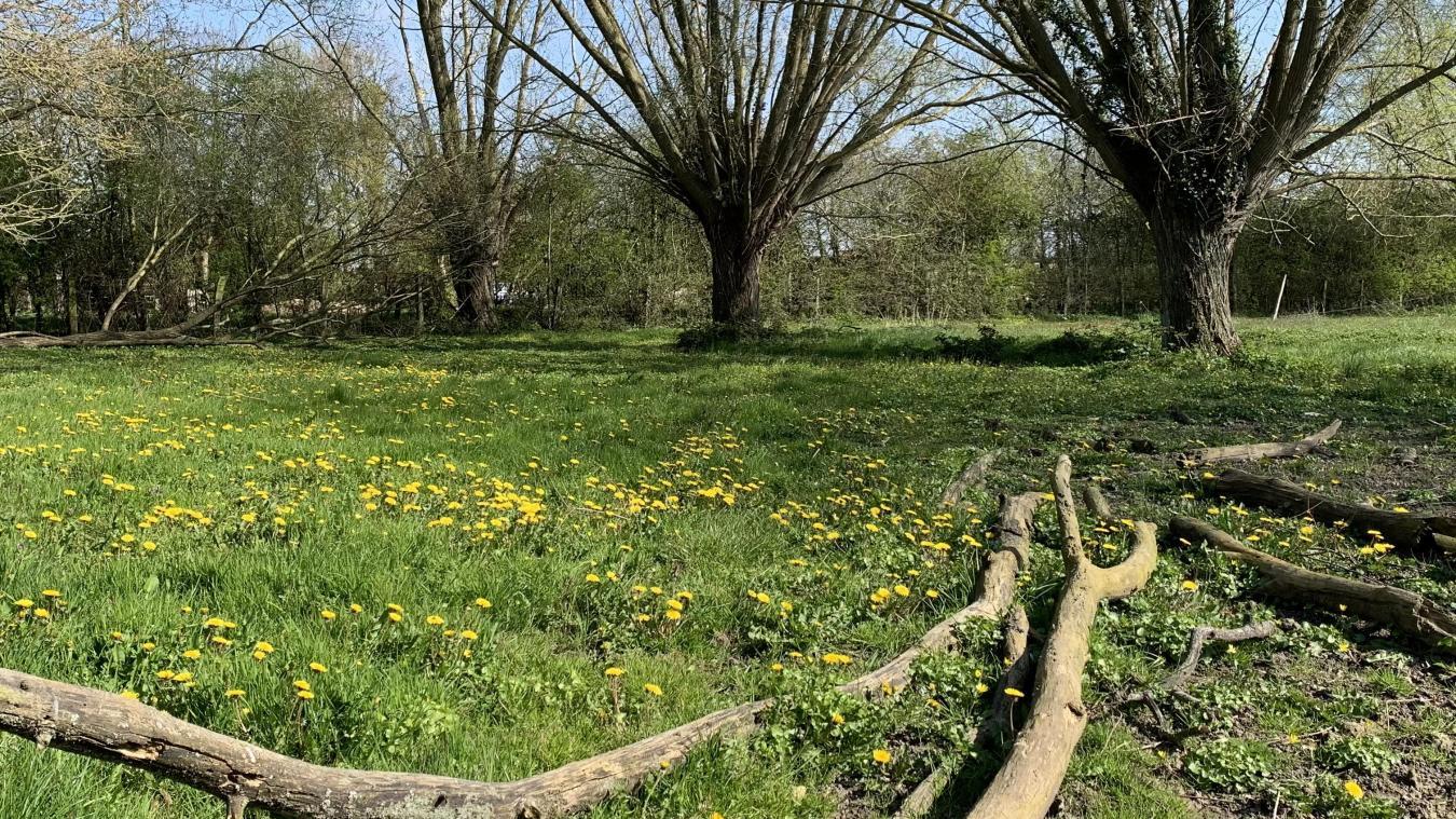 Le Département a programmé plus de 270 sorties nature, dont à Buysscheure.