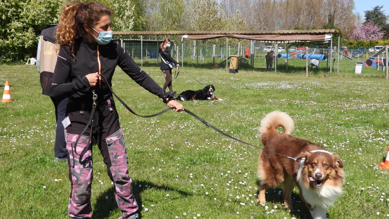 Les propriétaires de chiens se ruent au Club depuis le déconfinement.