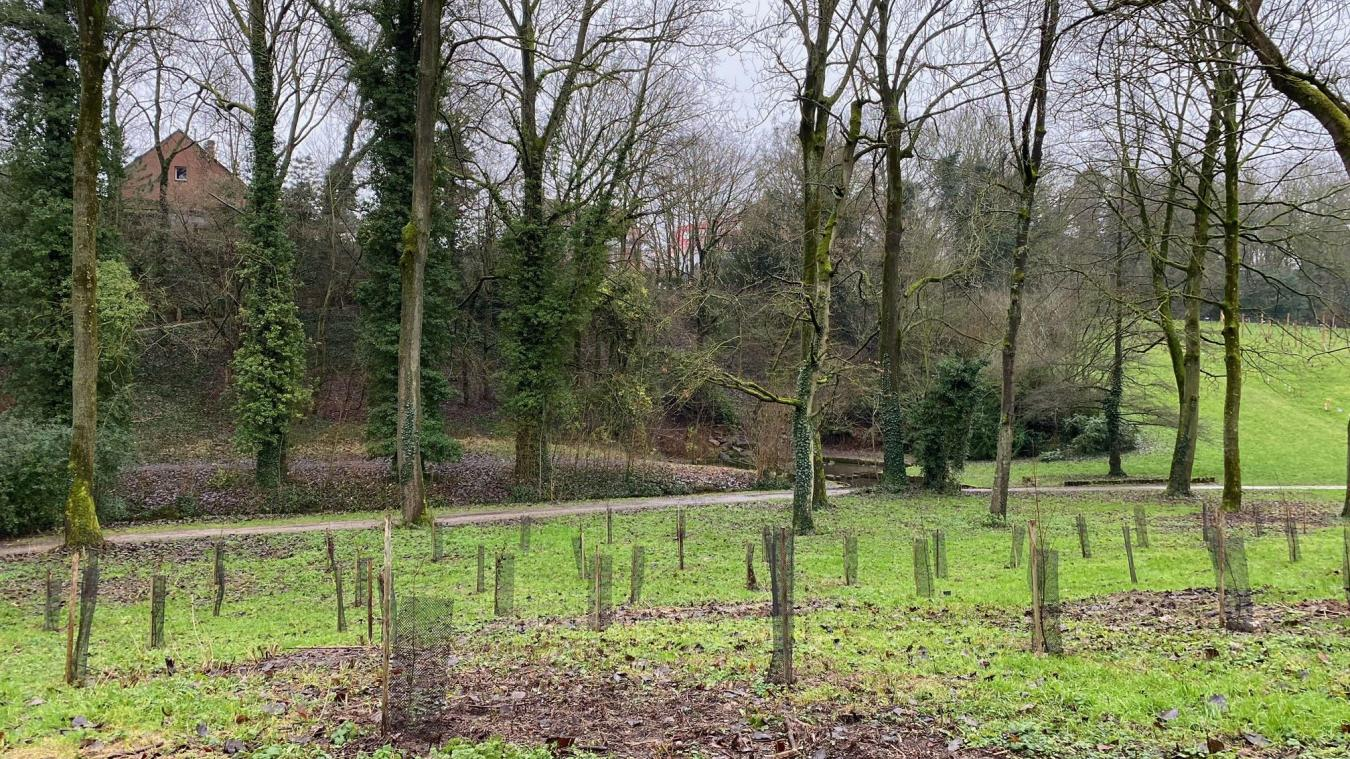 À Arras, la Ville plante 500 arbres par an, est-ce assez ambitieux?