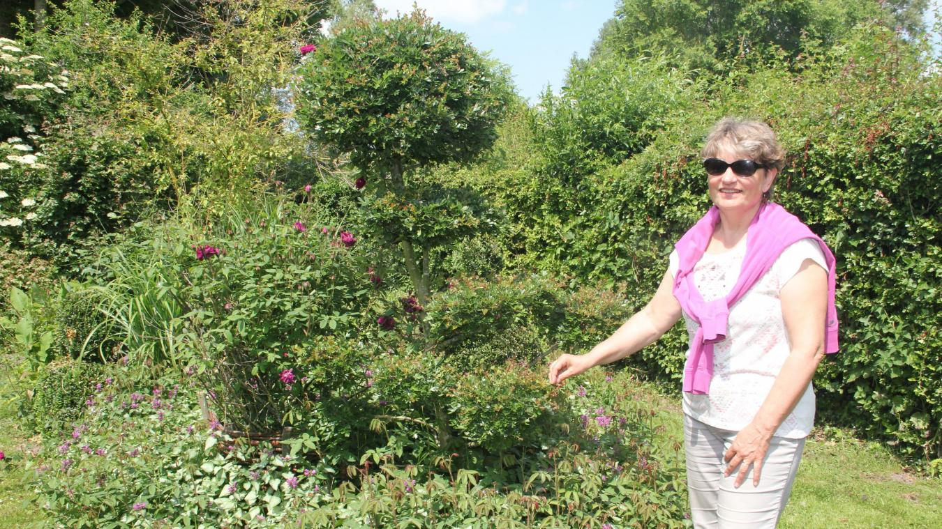 Les topiaires ou l'art de tailler les buissons. Ici, il s'agit d'aubépine et d'une taille en nuage.