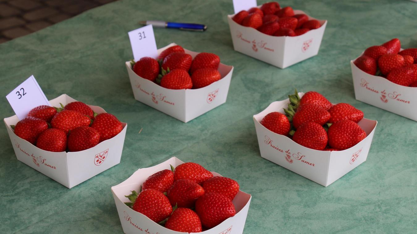 Samer: la Fête de la fraise fait son grand retour