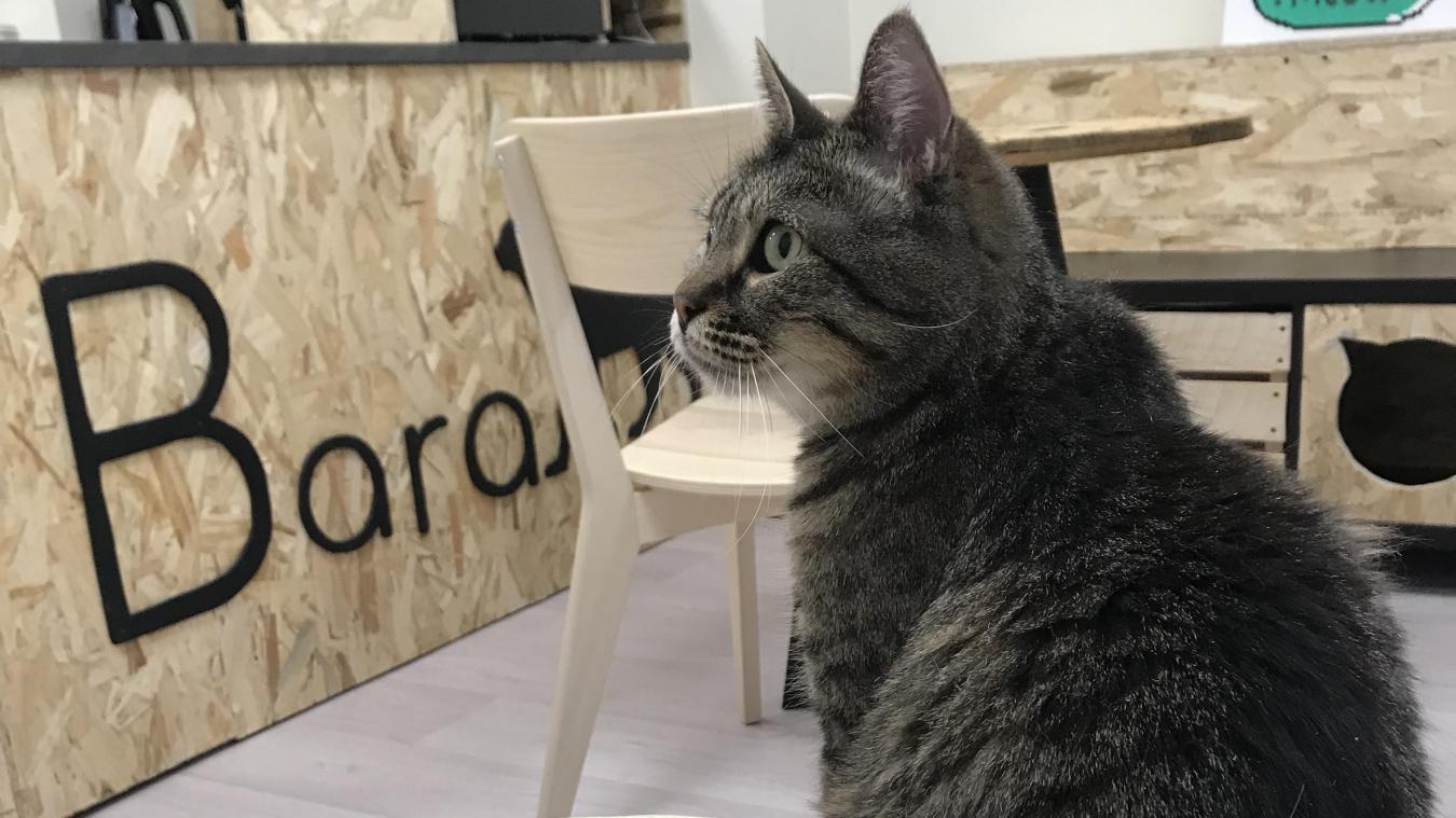 Les chats souffrent souvent de l'appréhension des familles d'accueillir des chats d'ores et déjà matures.