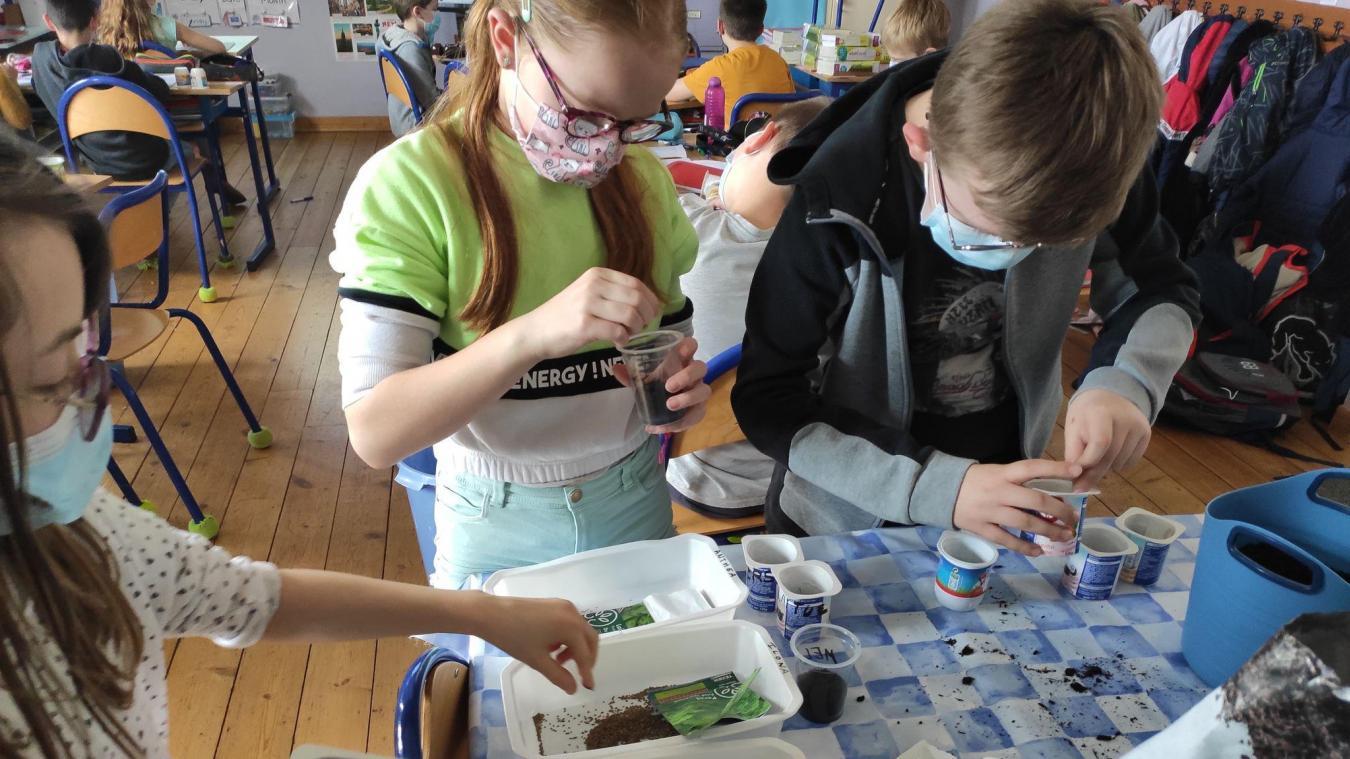 L'école du Sacré-Cœur de Coudekerque-Branche participe pour la première année au programme Éco-école.