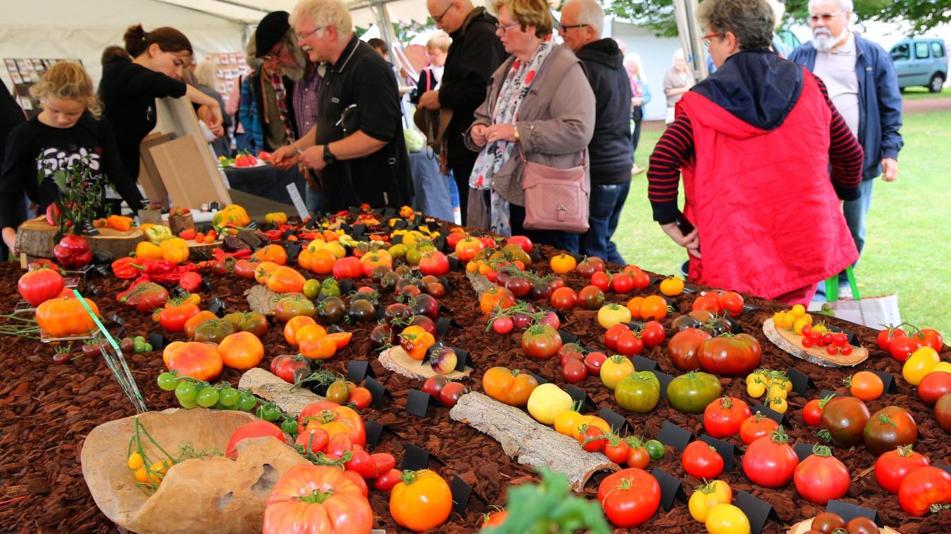 L'une des plus grandes fêtes européennes de la tomate à nouveau annulée.
