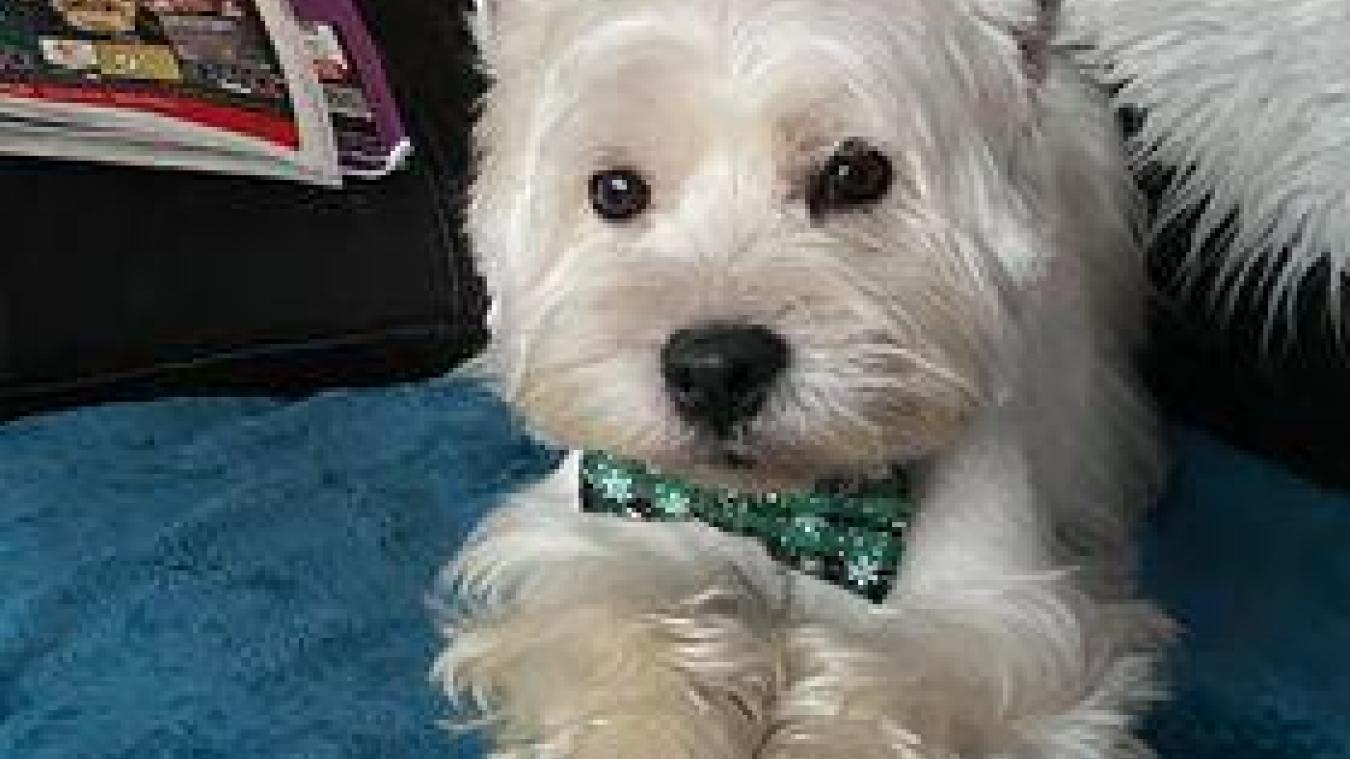 Coulogne: un petit chien recherché depuis samedi quartier du Virval