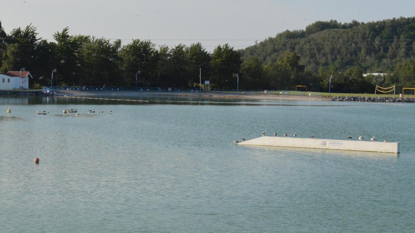 Les mouettes aiment le calme du lac, matin et soir.