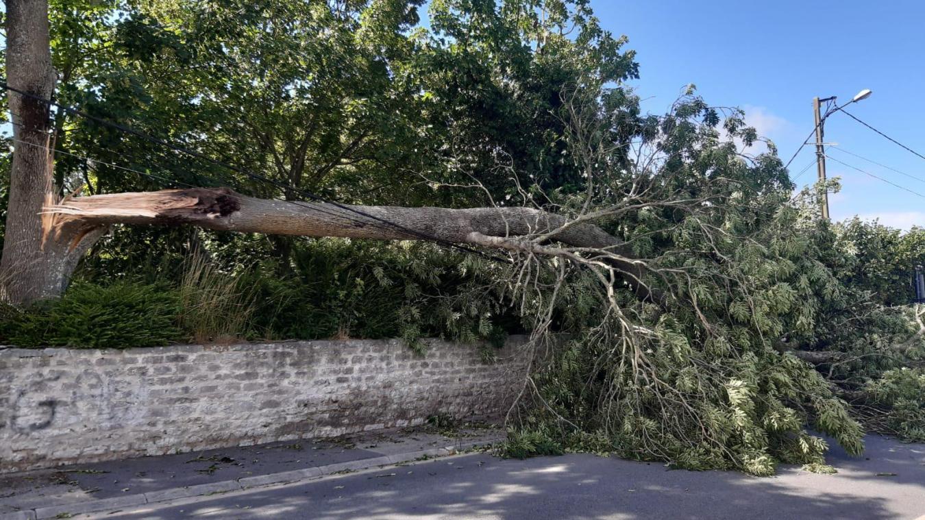 Un arbre de 15 mètres s'écroule sur la route principale de Fréthun (vidéo)