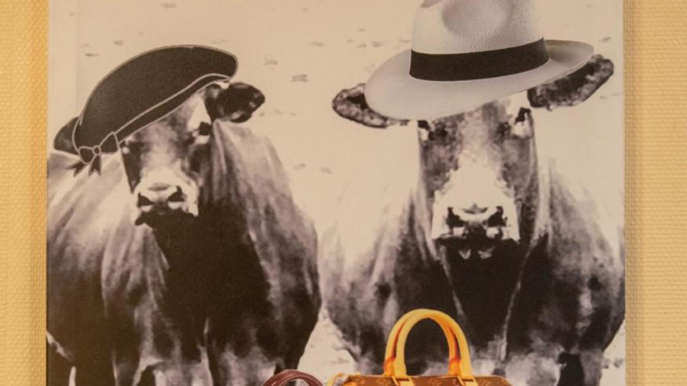 Des vaches comme vous n'en avez jamais vues... (photo Jacky Devos)