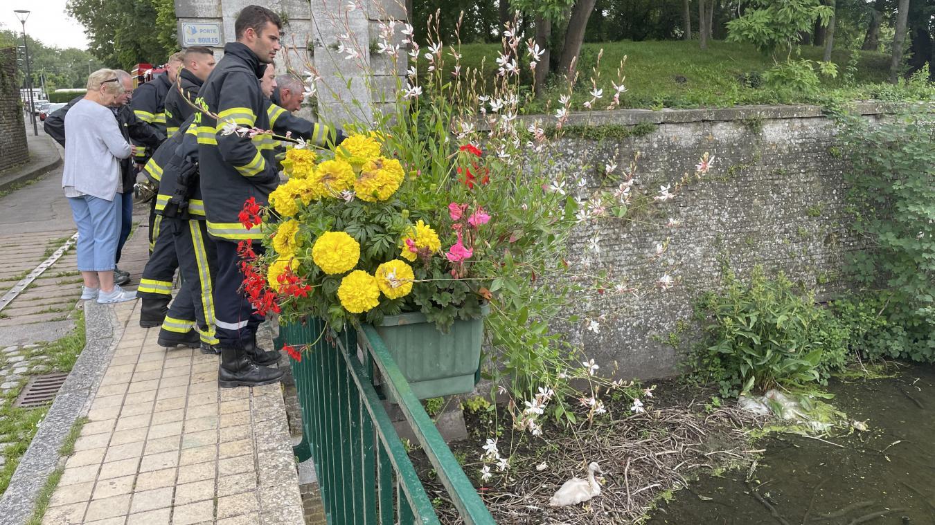 Ce mardi 13 juillet, vers 17 h, les pompiers étaient sur place pour tenter de sauver le cygnon.