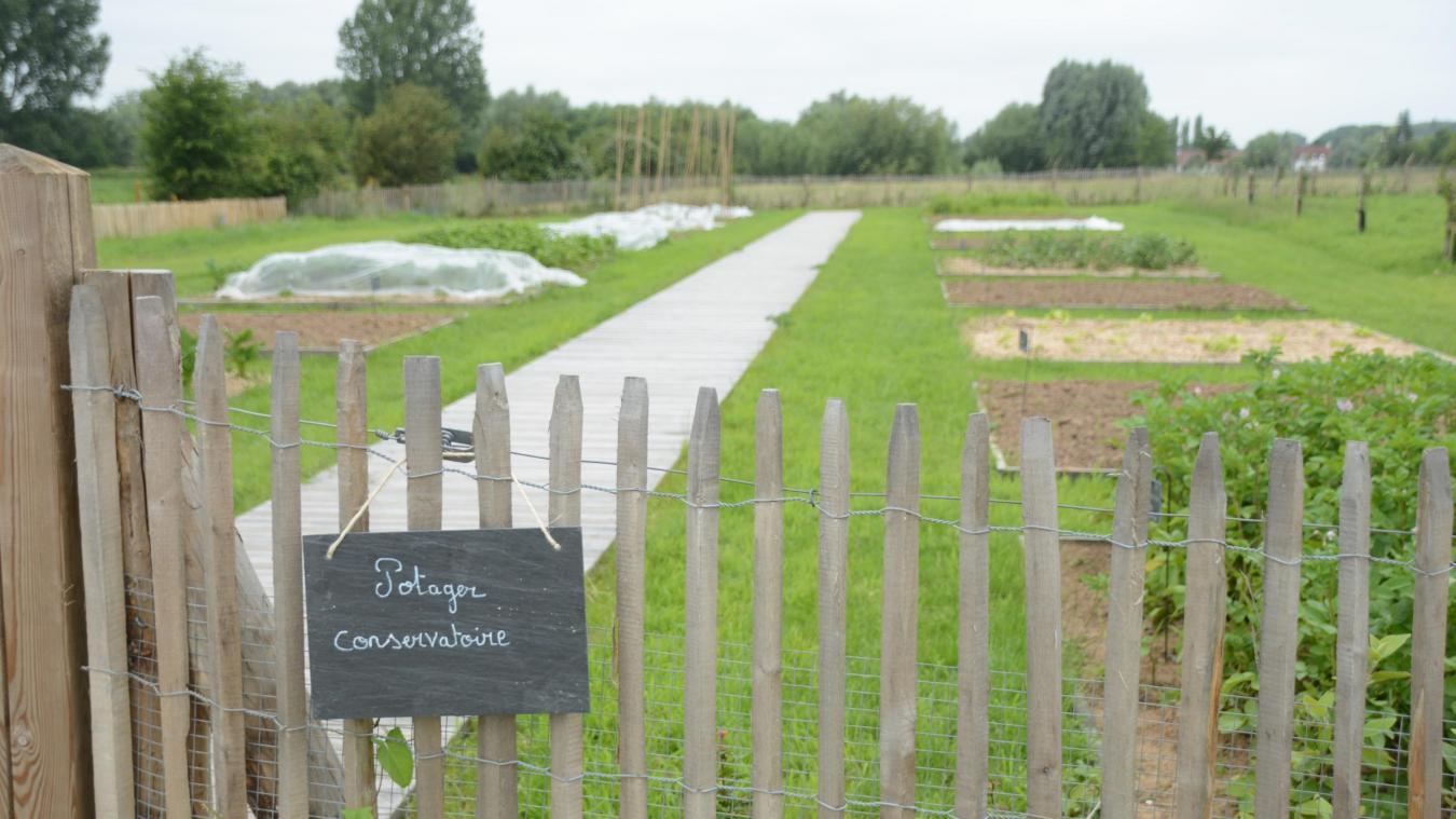 Le potager conservatoire a été créé pour sauvegarder le patrimoine et le savoir-faire du marais audomarois.