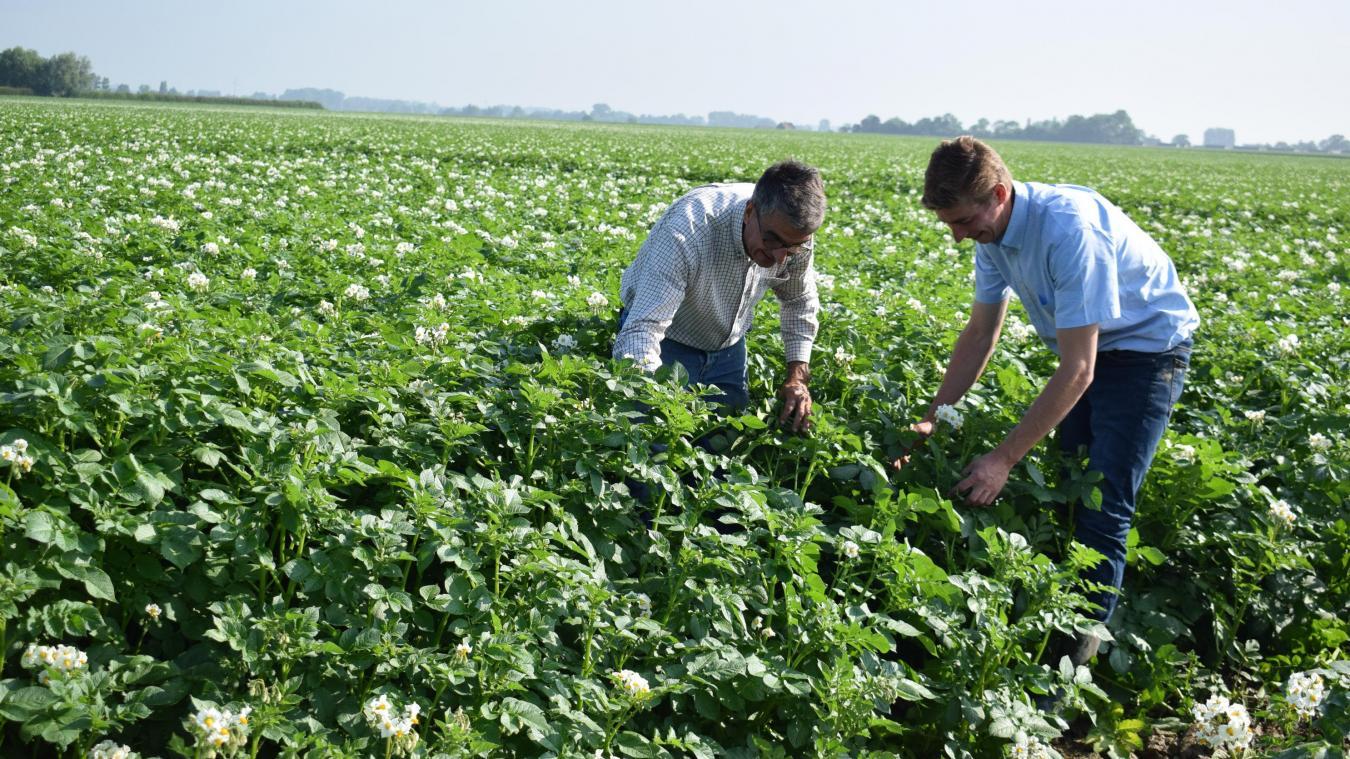 Alexandre Deblock et son neveu, dans un champ, en train d'analyser la culture de pommes de terre.