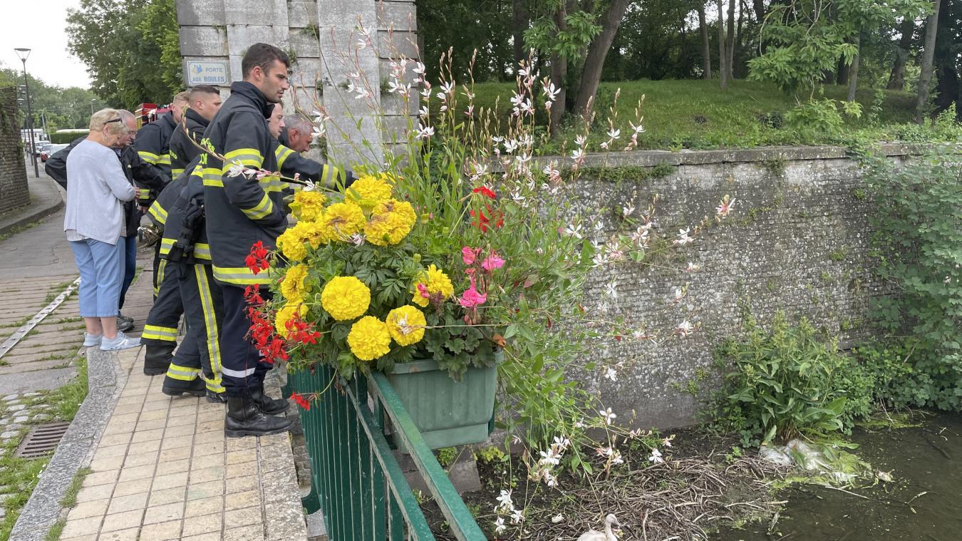 Mardi 13 juillet, les sapeurs-pompiers sont intervenus pour dégager le corps de la maman cygne et tenter de sauver le cygnon.