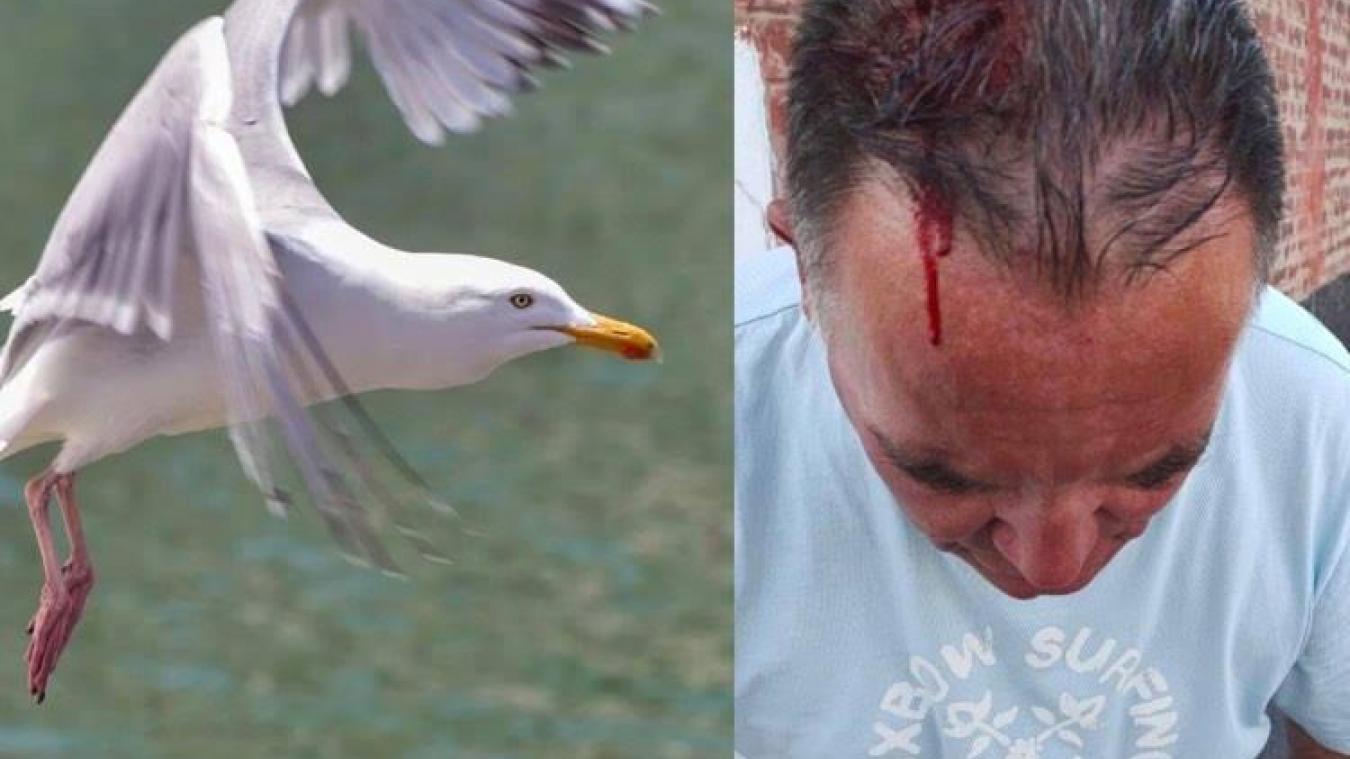 Un Berckois attaqué par un goéland