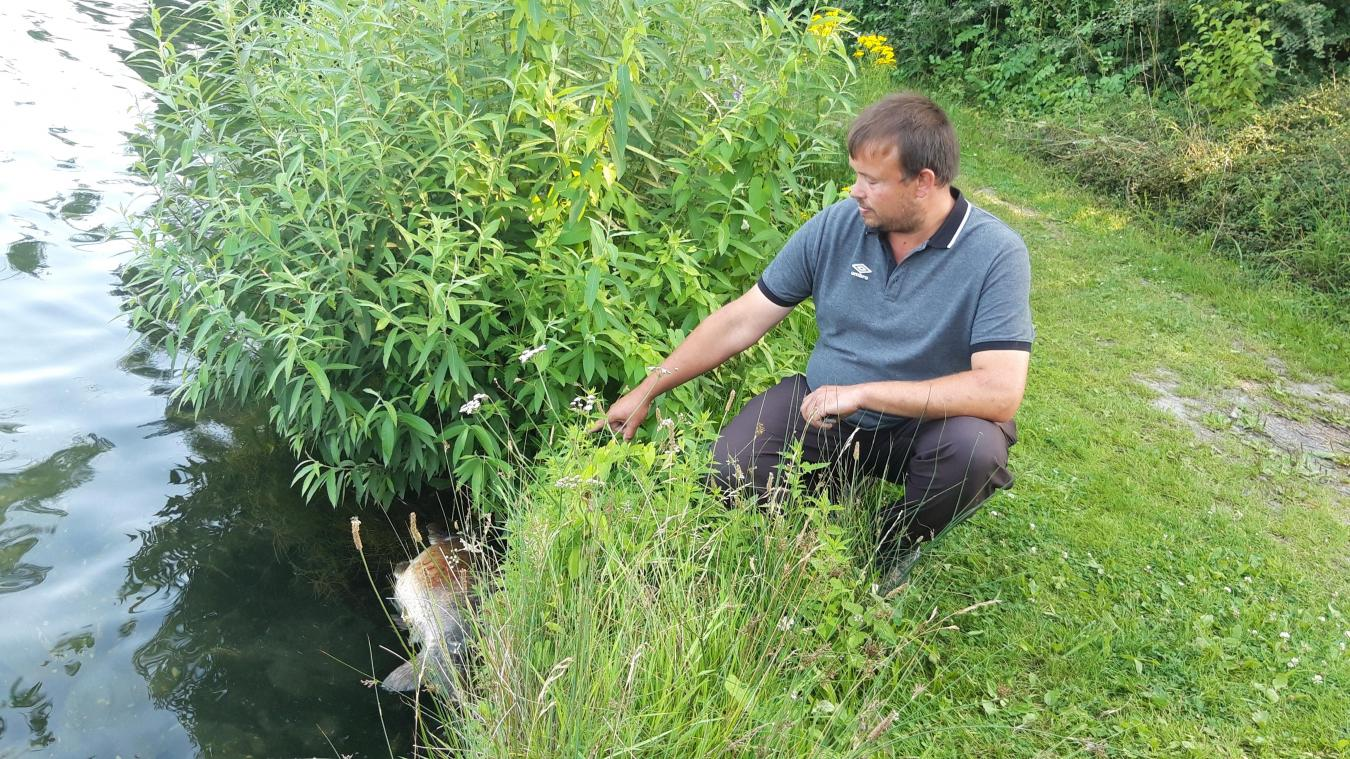 Cyril Ryckenbusch, garde-pêche démissionnaire, s'interroge sur l'importante mortalité des poissons du lac d'Armbouts-Cappel.