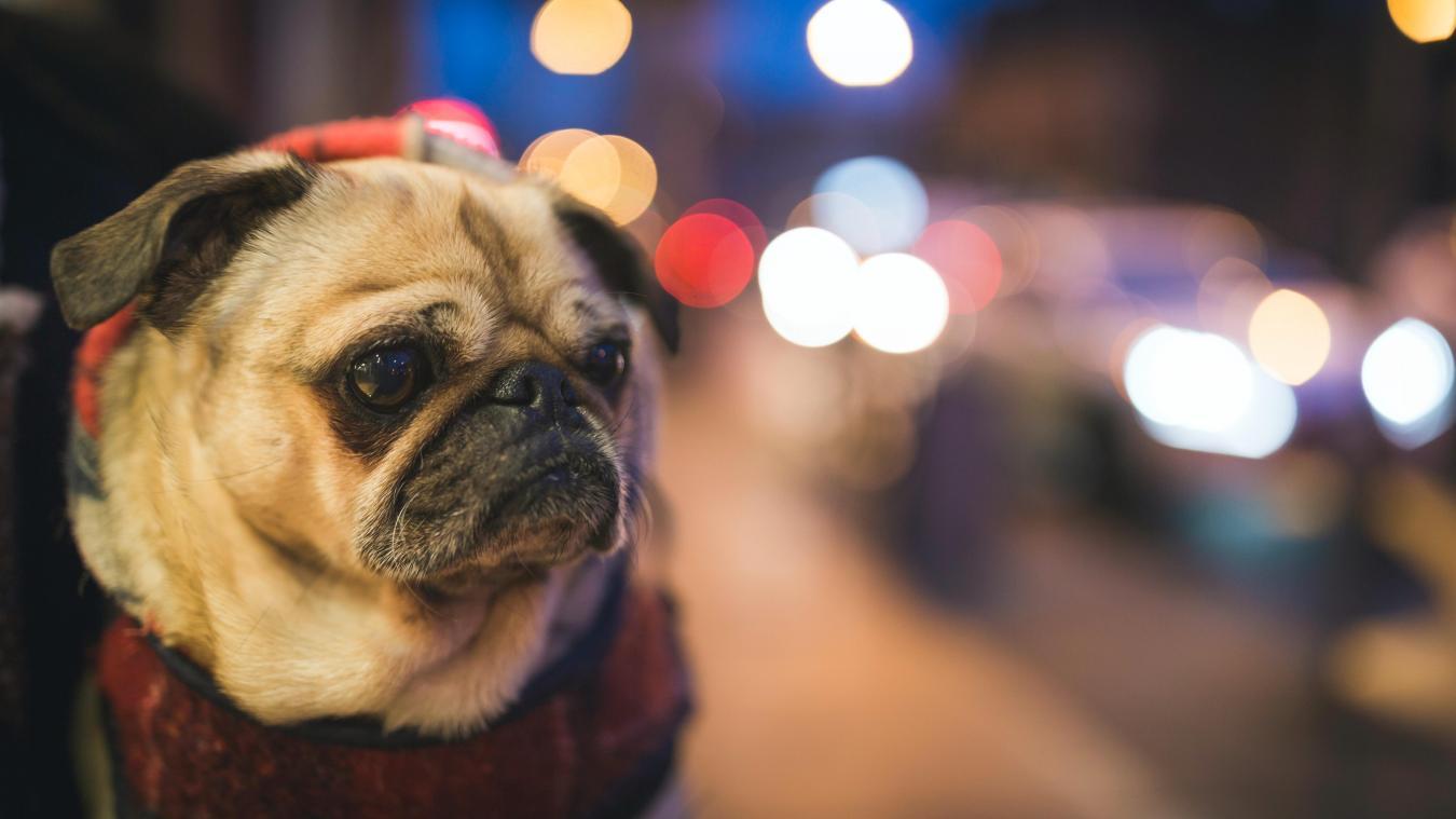 Le chien a été transporté dans une clinique vétérinaire