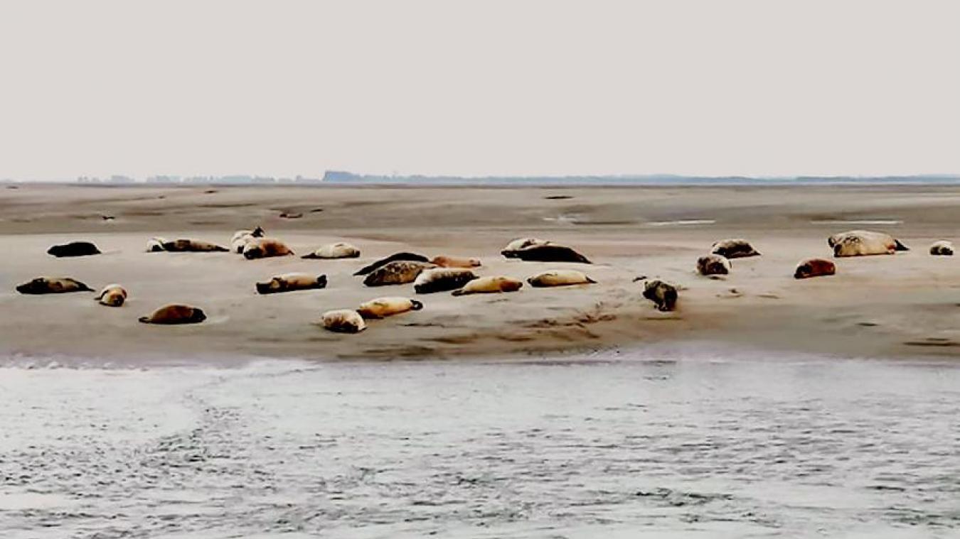 Les règles à respecter pour observer les phoques à Berck (et ailleurs)