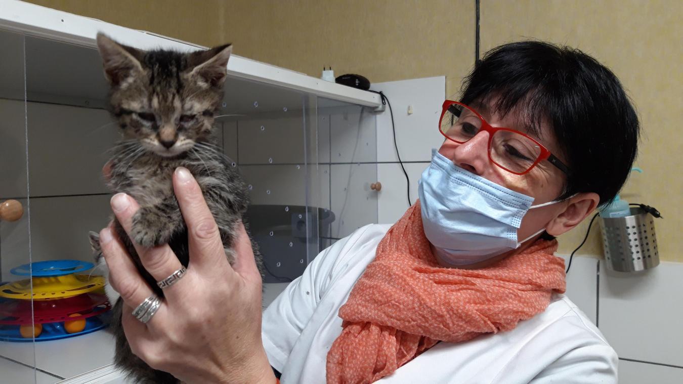 Lydie Erckelboudt de l'association Les Chats de l'espoir, à Watten, et ses bénévoles sauvent quotidiennement des chats et des chatons.