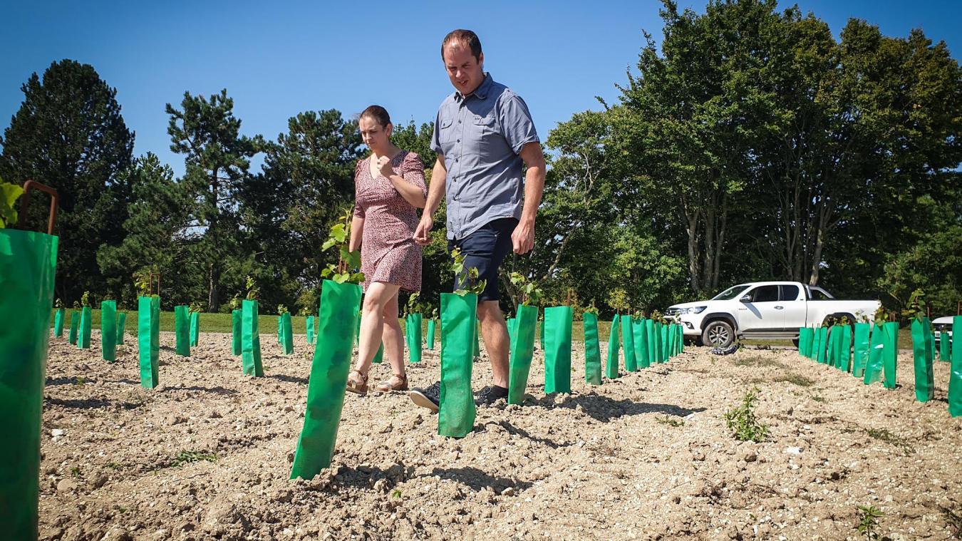 Julien et son épouse veillent sur cet hectare consacré à la vigne.