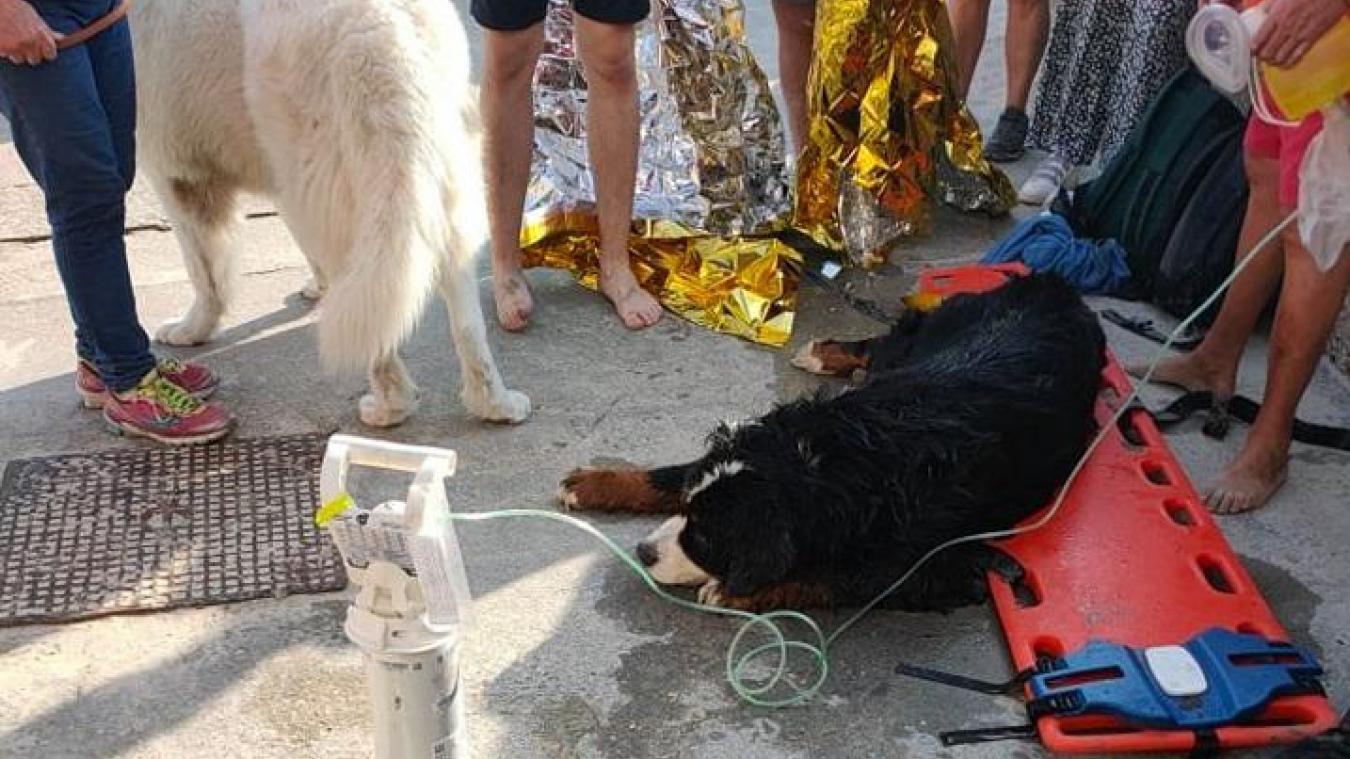 Berck : un Bouvier bernois meurt, victime de la chaleur