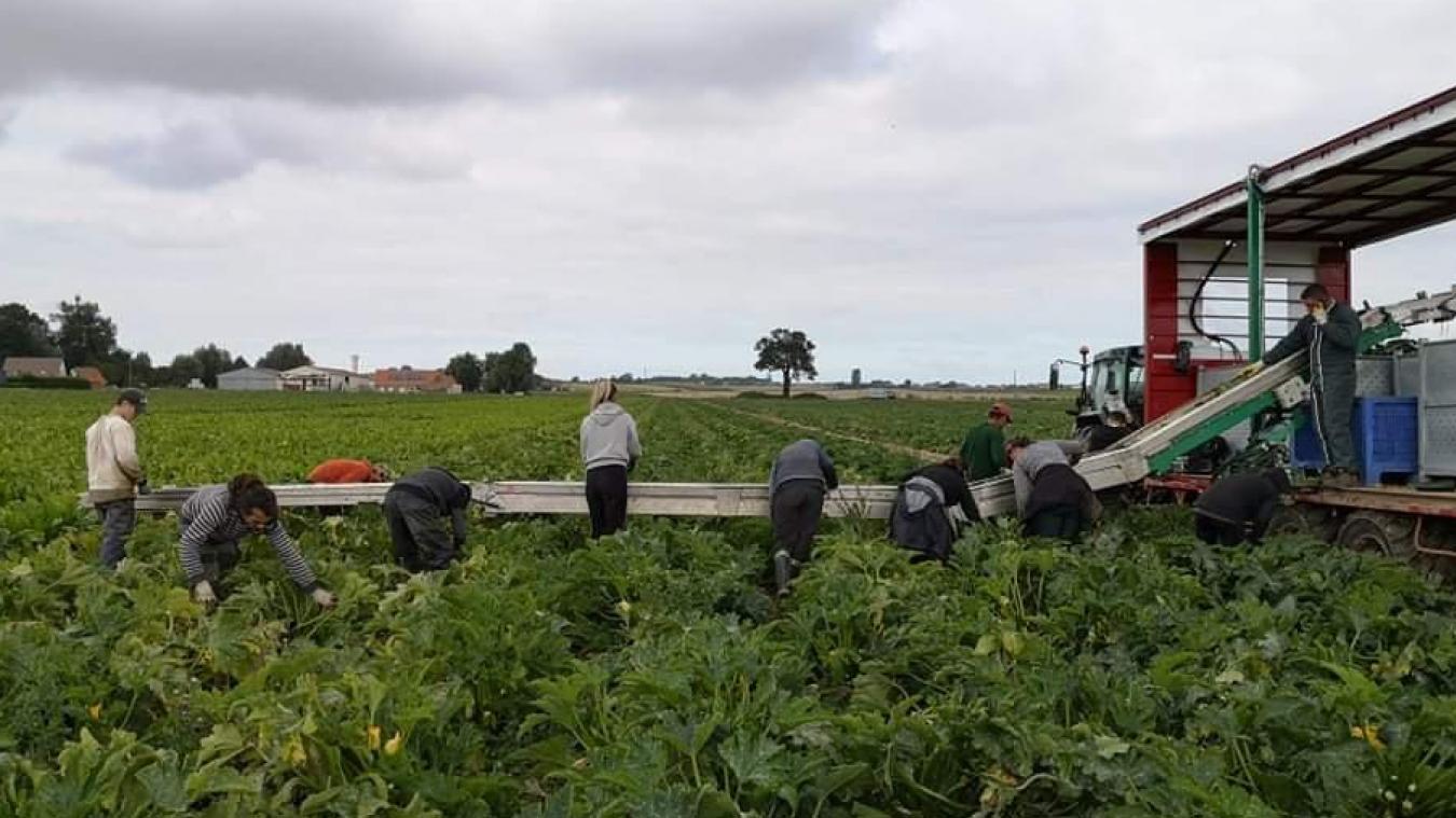 Une trentaine de personnes était sur l'exploitation cet été pour la récolte des courgettes.
