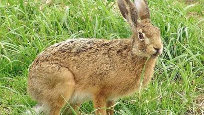 Audembert : il vise un lapin et blesse son frangin
