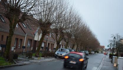 Pour la sécurité des habitants, bon nombre d'arbres vont être élagués