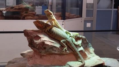 Béthune : ce qu'il faut savoir sur les reptiles avant d'en adopter un lors de la bourse