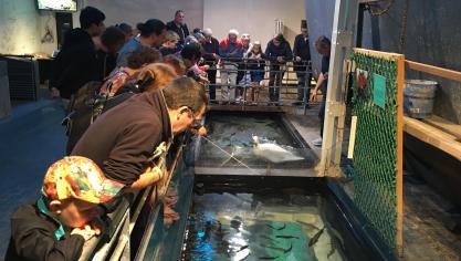Étaples : le musée de la pêche Maréis a le vent en poupe