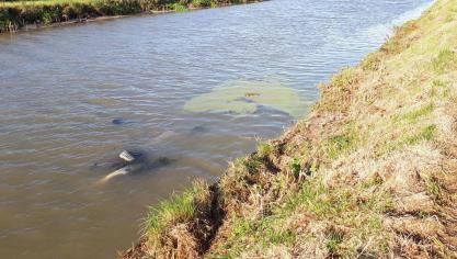 Gravelines : une voiture sans immatriculation immergée dans le canal