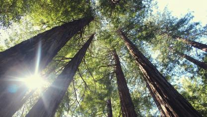La plantation d'un million d'arbres en trois ans voté par la Région Hauts-de-France